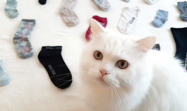 3 דרכים להתמודד עם גרביים בודדות
