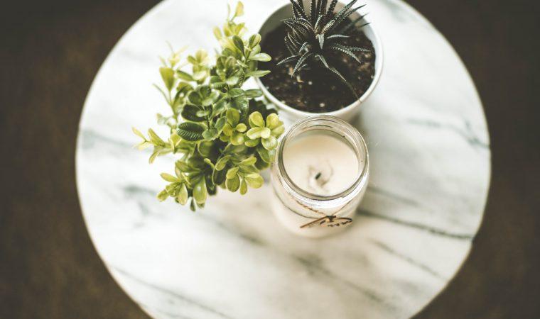 איך לשלב צמחים מלאכותיים בבית ולהשאר בחיים